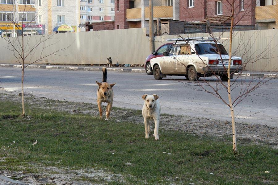 Бездомные собаки в Уютном