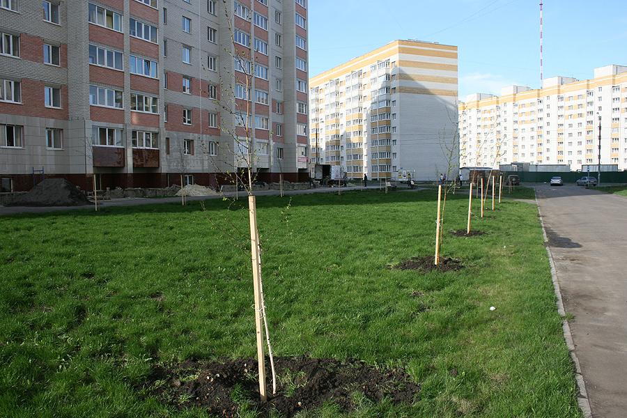 Озеленение микрорайона Уютный