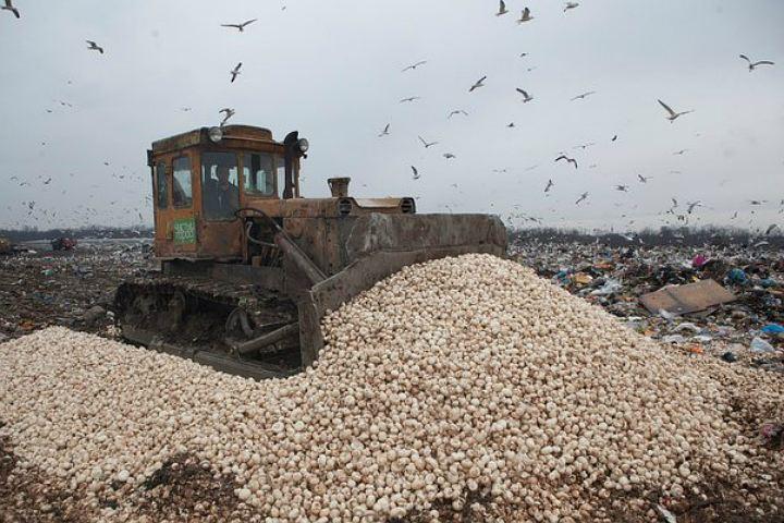 Уничтожение грибов