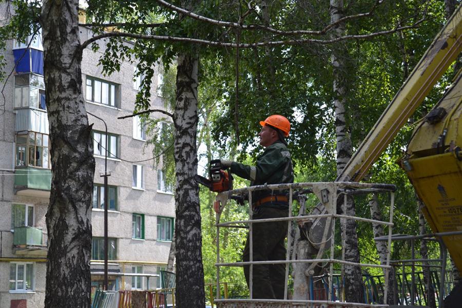 Уничтожение деревьев