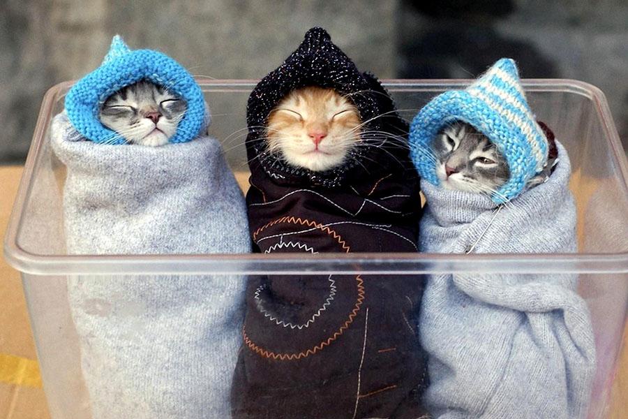 Отопление и коты